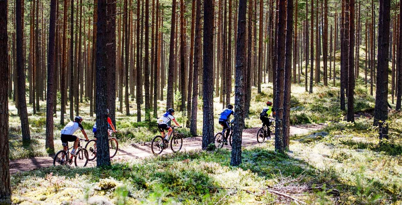 cykelvasan_skog.jpg